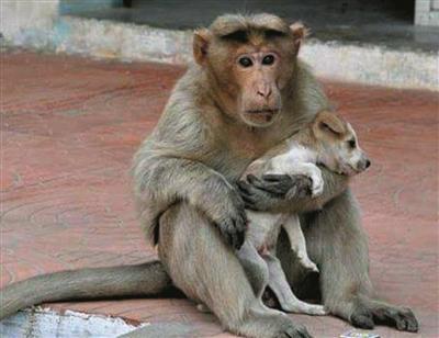 印度动物脸谱图片